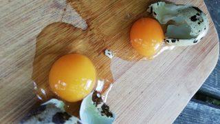 Jajka przepiórcze, właściwości zastosowanie w medycynie i kuchni